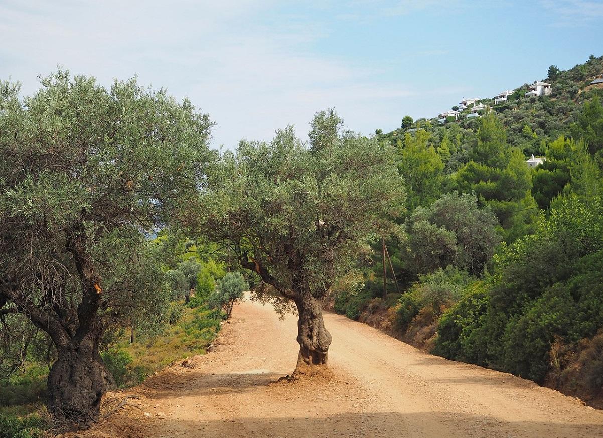 Przyroda w Grecji